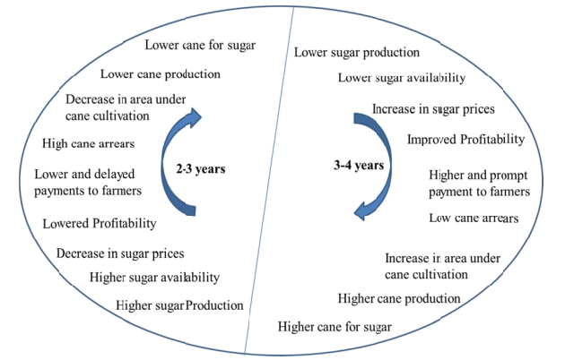 Sugar cycle in India